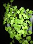Children Planted Turnips – Yum!