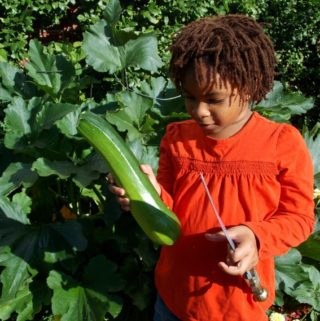 Children Growing  Zucchini in our Front Yard – Earth Science