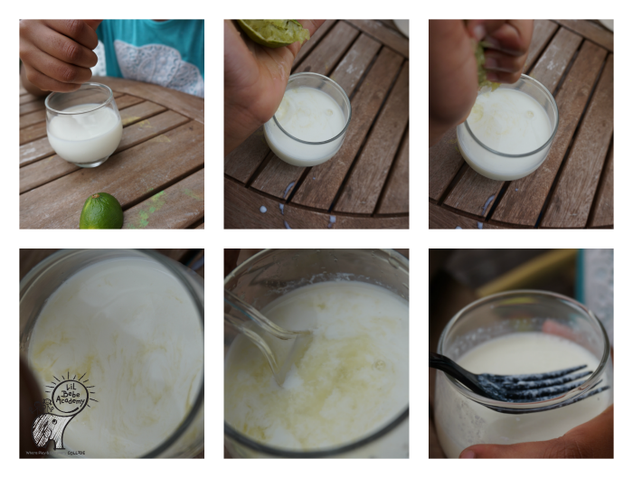 Science Fair Project Mixing Milk With Lime Lemon and Vinegar